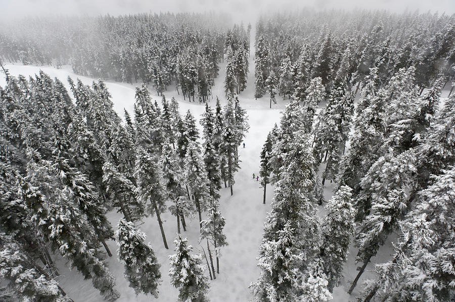 Snow Covered Trees In A Forest Photograph by Keith Levit / Design Pics