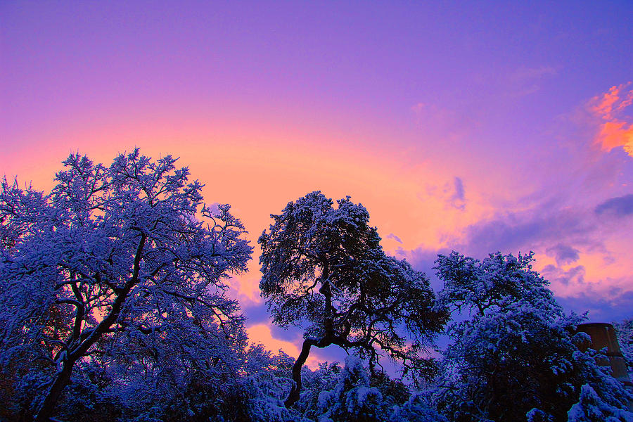 Snow Covered Trees In Dusk Colors Photograph by Edward Swearingen