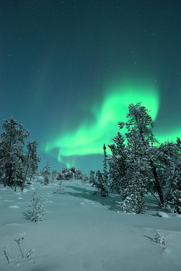 Snow Covered Trees With Moonlight And Photograph by Michael Ericsson