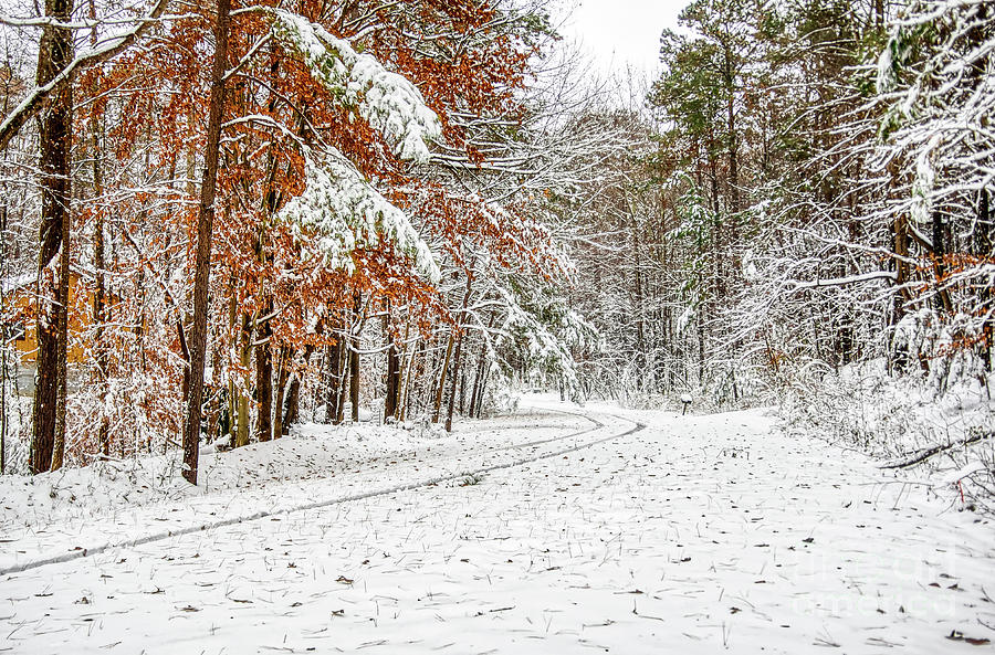 Snow Photograph - Snow Day by James Foshee