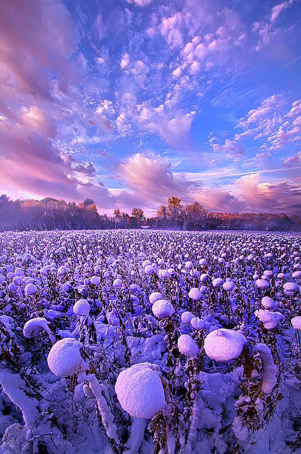 Life Photograph - Snow Flowers by Phil Koch