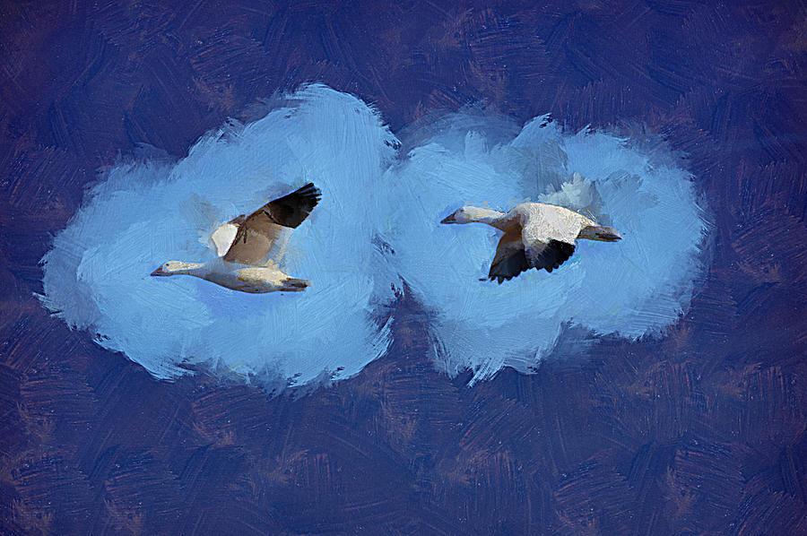 Snow Geese by Trish Tritz