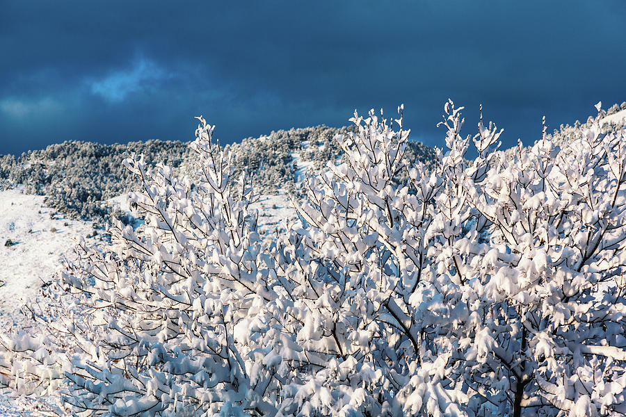 Snow In Golden, Colorado by Jeanette Fellows