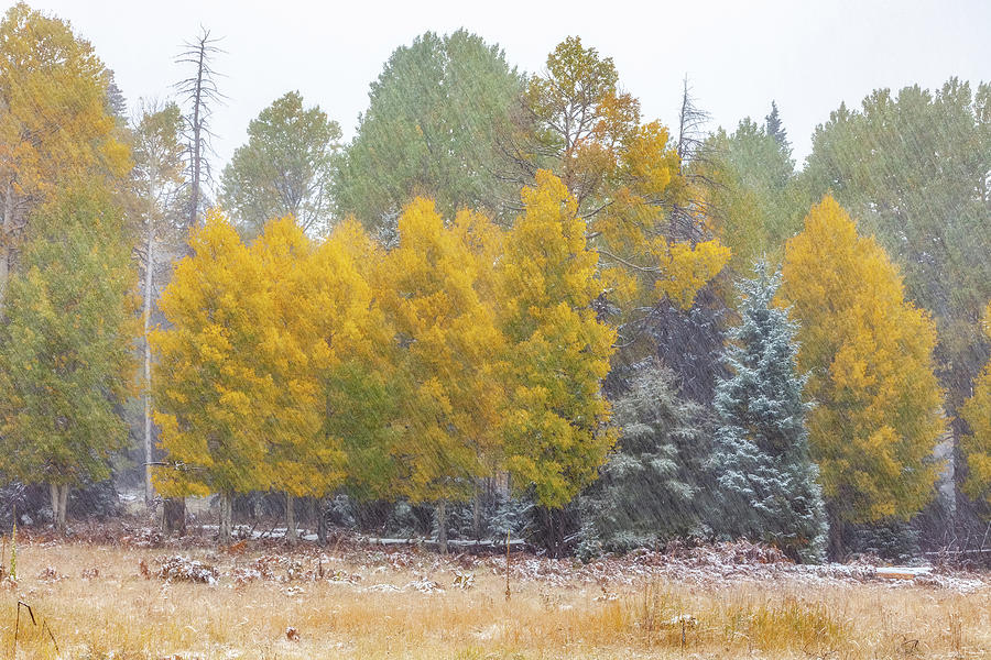 Snow in Technicolor by Rick Furmanek