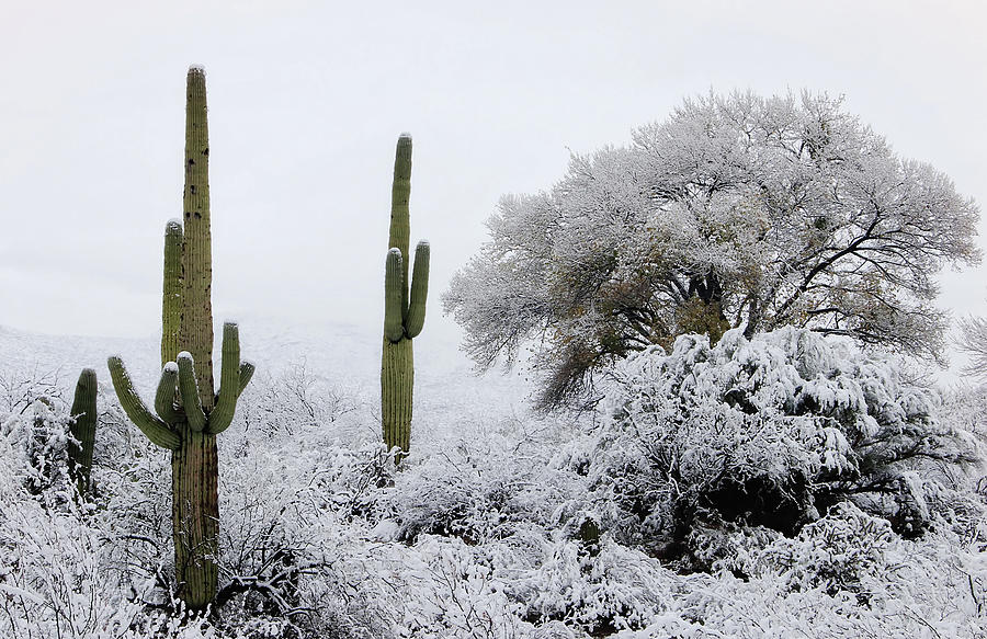 Snow In The Desert by ELAINE MALOTT