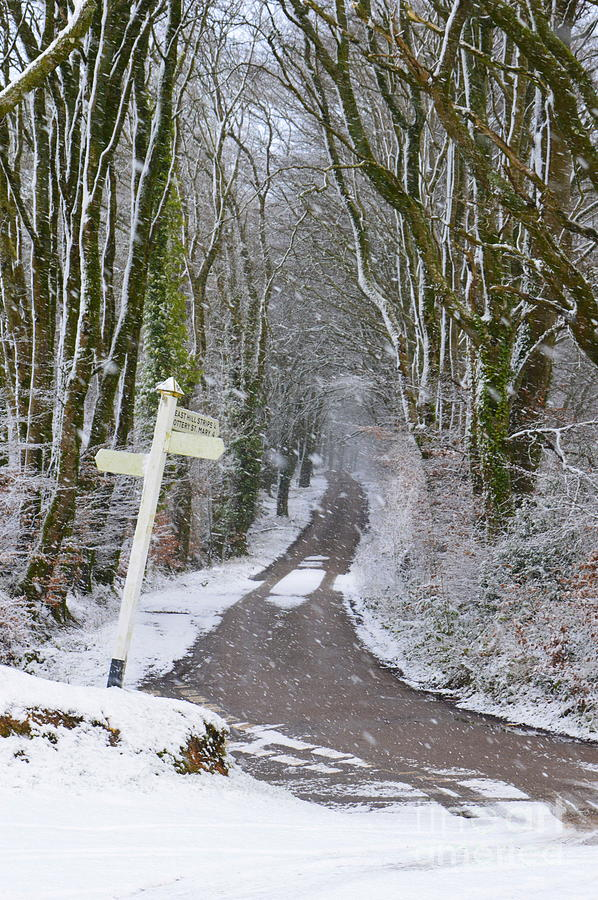 Snow Photograph - Snow In The Trees by Andy Thompson