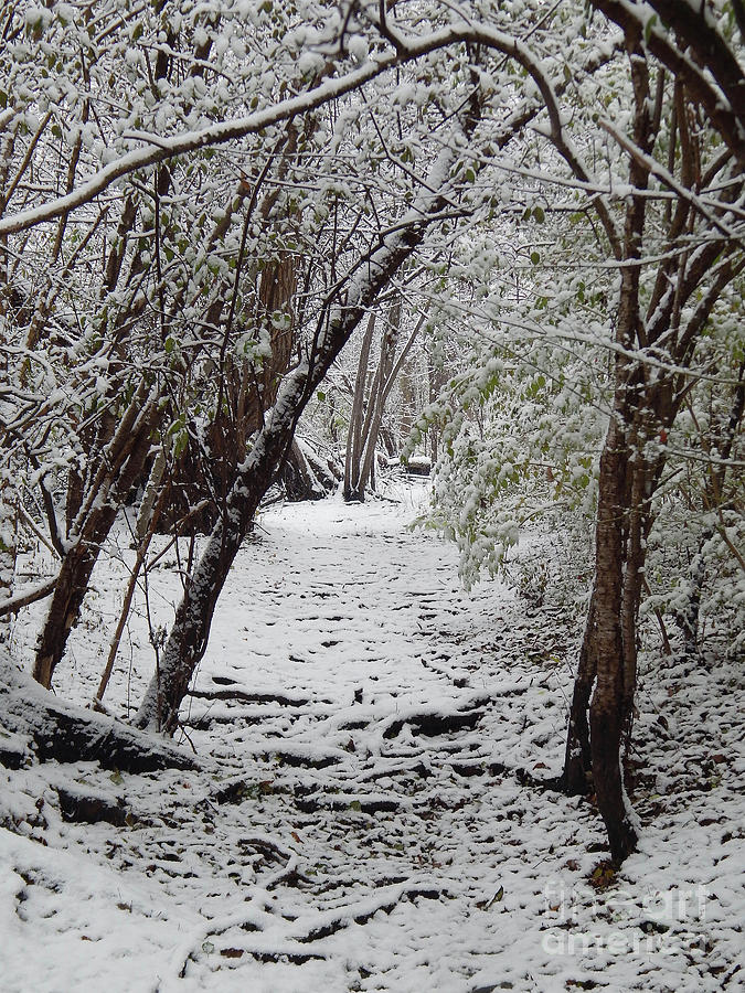 Trail Photograph - Snow In The Woods by Phil Perkins