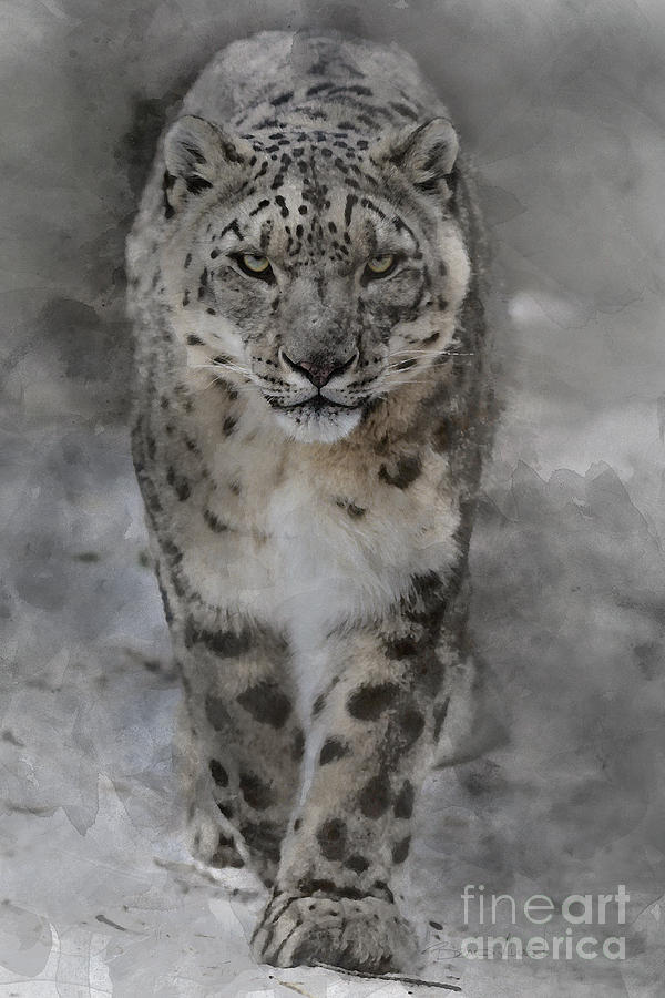 Snow Leopard II by Brad Allen Fine Art