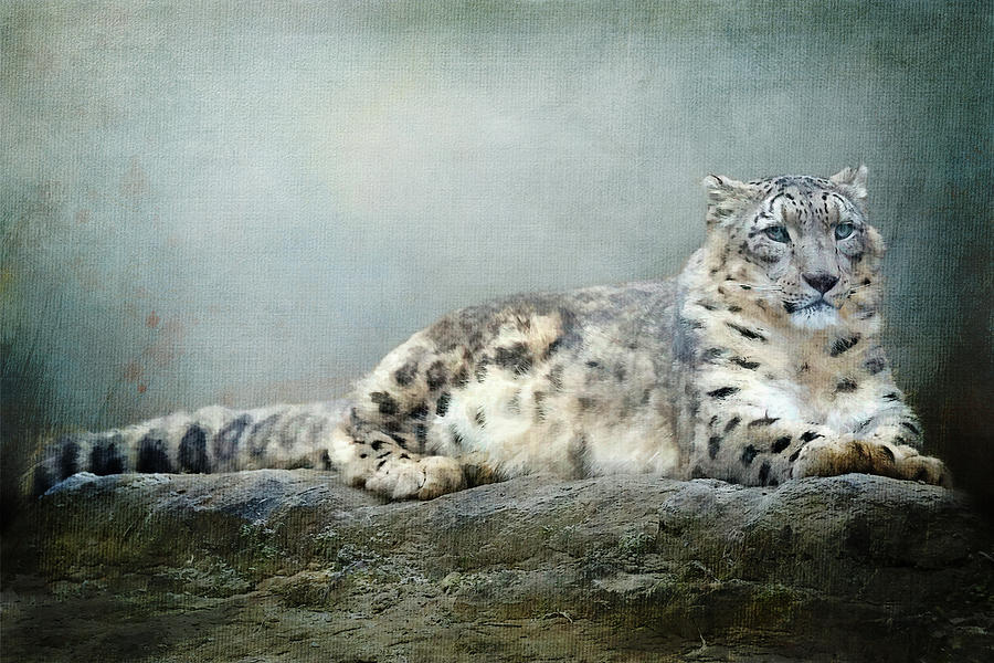 Snow Leopard Textured by Terry Davis