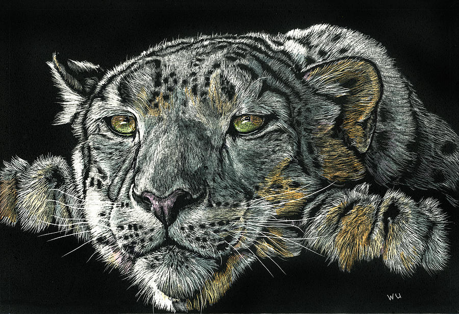 Snow Leopard by William Underwood