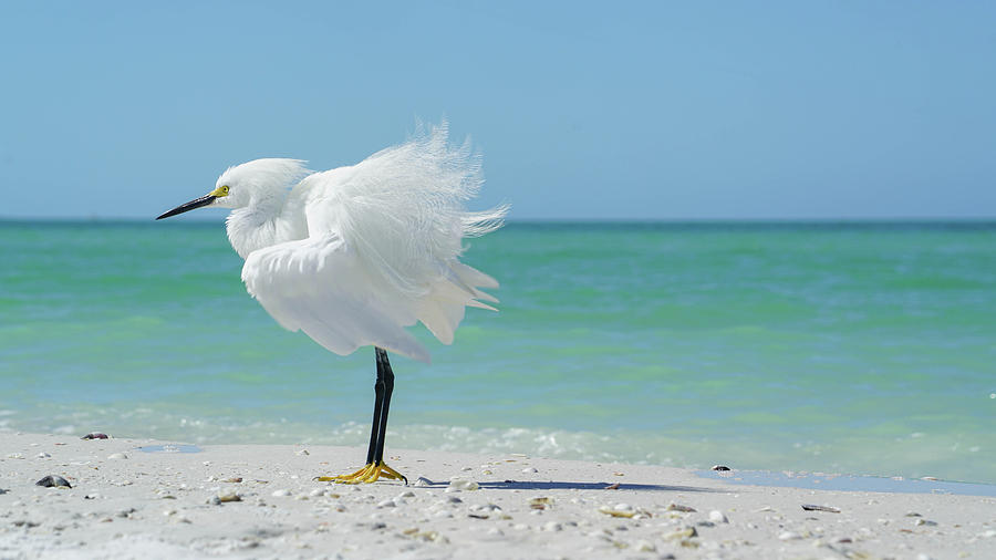 Snowy Egret Photograph - Snow on marco by Joey Waves