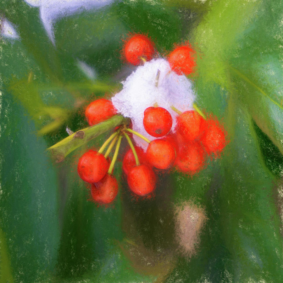 Snow on Red Berries by Jason Fink