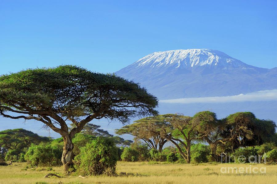 Beauty Photograph - Snow On Top Of Mount Kilimanjaro by Volodymyr Burdiak