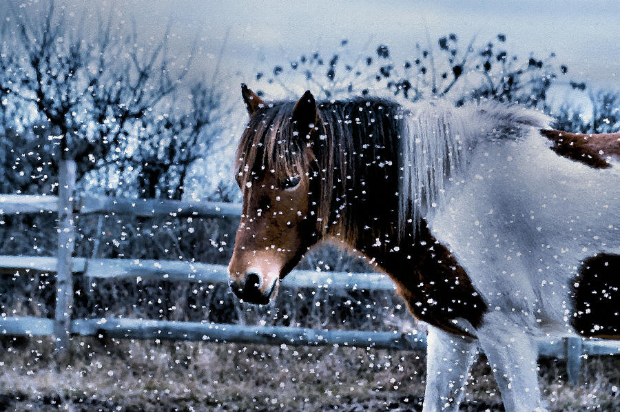 Snow Pony by Natalie Holland
