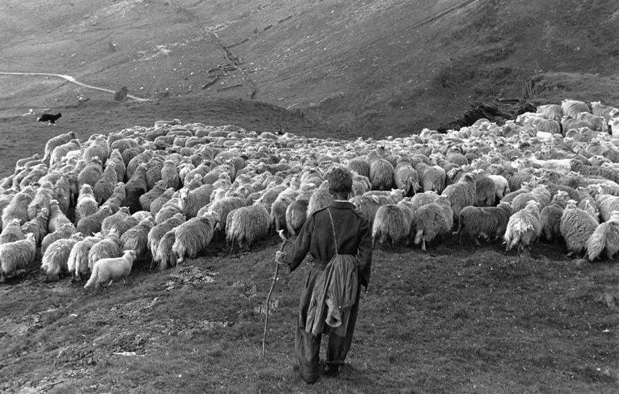 Snowdonia Sheep Photograph by Grace Robertson