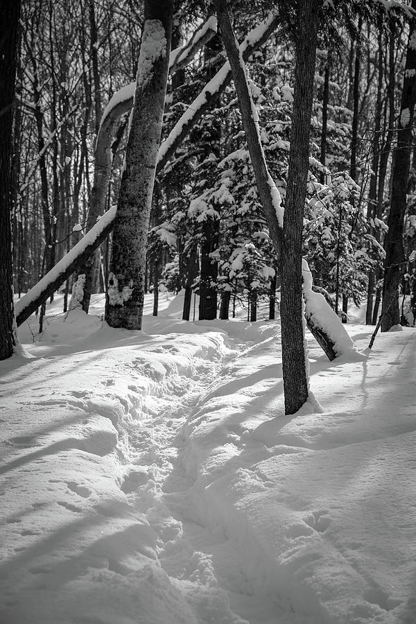 snowshoe path1 by David Heilman