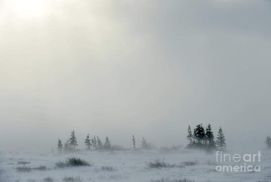 Country Photograph - Snowstorm In Tundra Landscape With by Sergey Uryadnikov