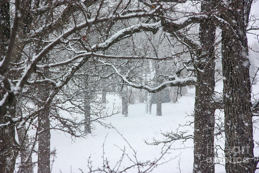 Snowstorm with Old Trees by Kevin McCarthy