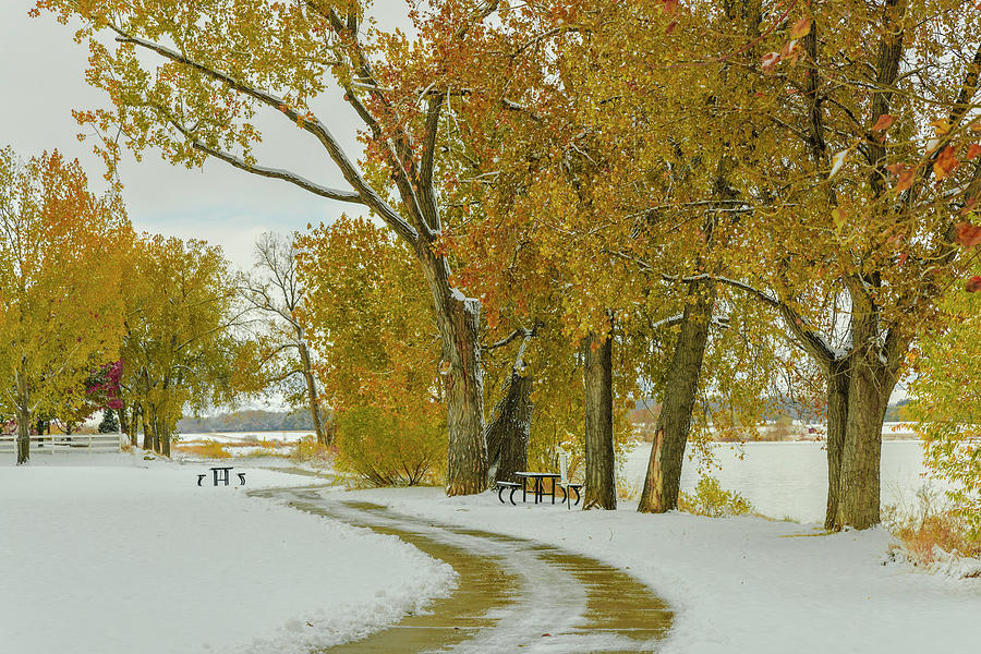 Snowy Autumn Day by James BO Insogna