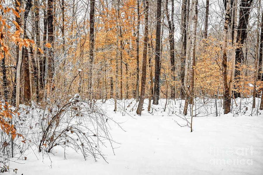 Snow Photograph - Snowy Backyard by James Foshee