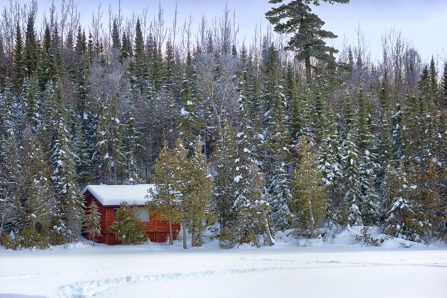 Snowy Cabin in the Woods by Susan Rissi Tregoning