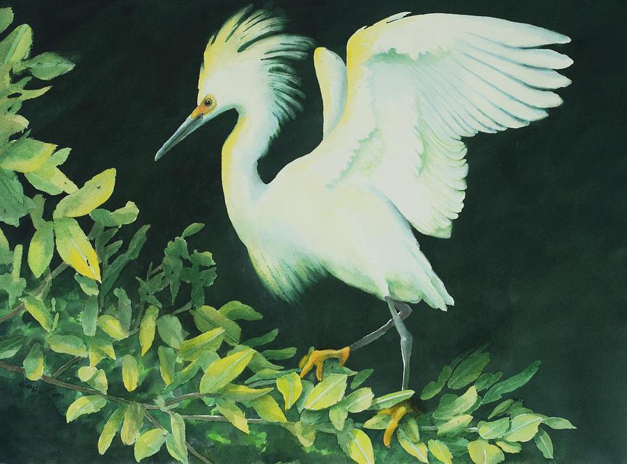 Snowy Egret by George Harth