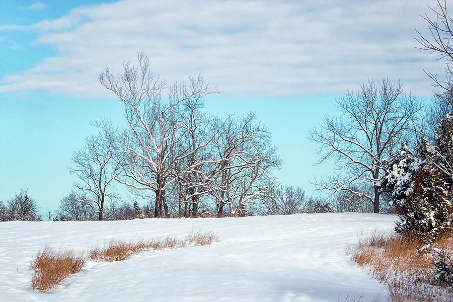 Snowy Fields of Manassas by Travis Rogers