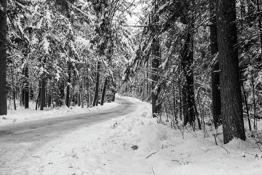 Snowy Forest Road in Winter by Betty Denise