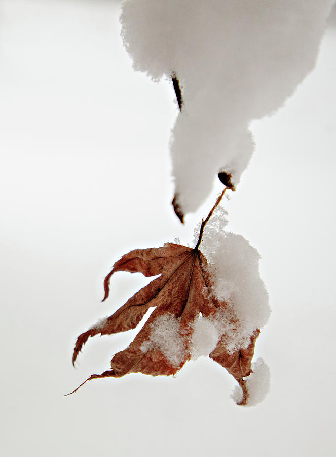 Snowy Leaf by Mary Jo Allen
