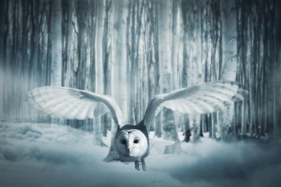 Snowy Owl In Flight by Art Shack