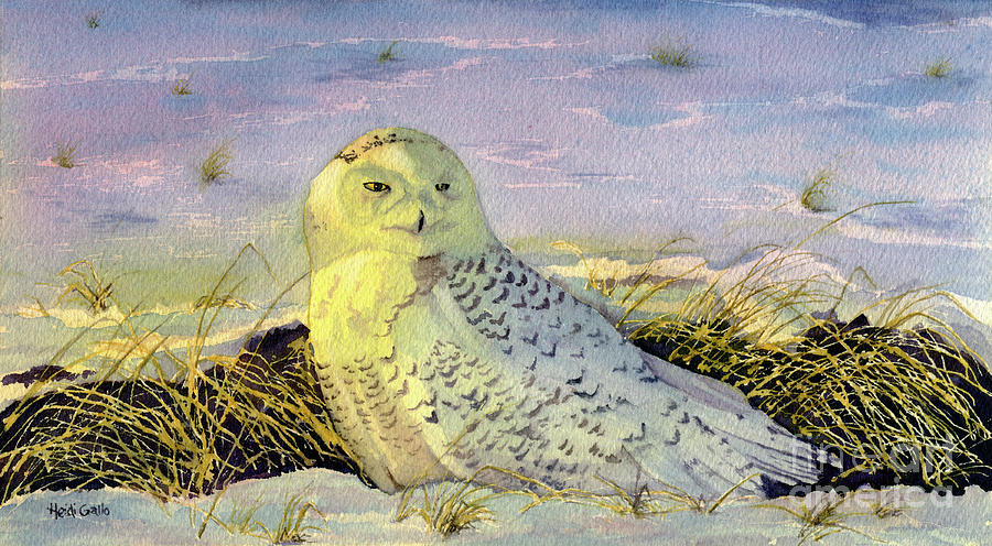 Snowy Owl in the Snow by Heidi Gallo