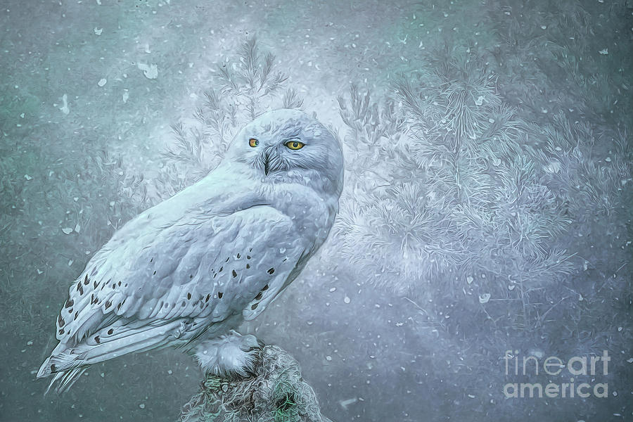 Snowy Owl in winter by Brian Tarr