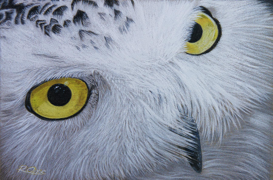 Snowy Owl Drawing - Snowy Owl by Raymond Ore