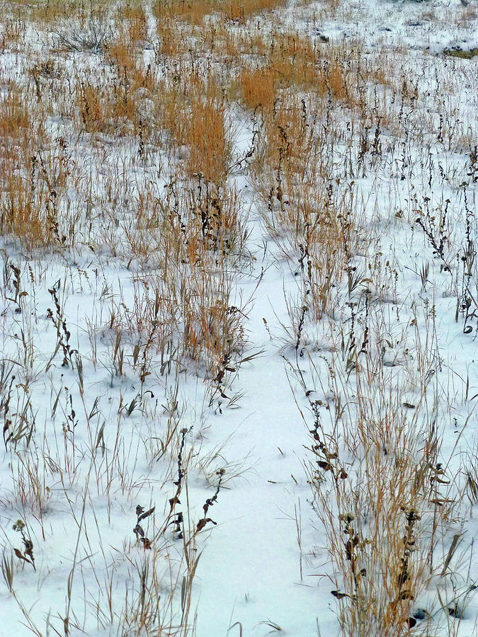 North Dakota Photograph - Snowy Path by Cris Fulton