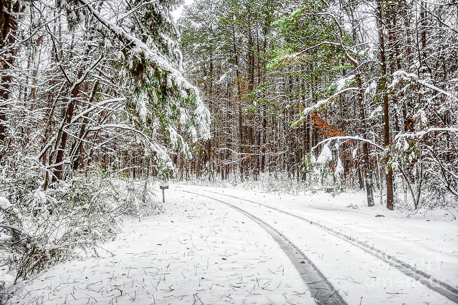 Snowy Path by James Foshee