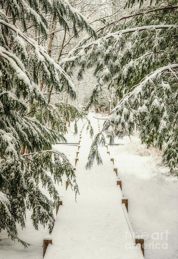 Snowy Pines by Susan Garver