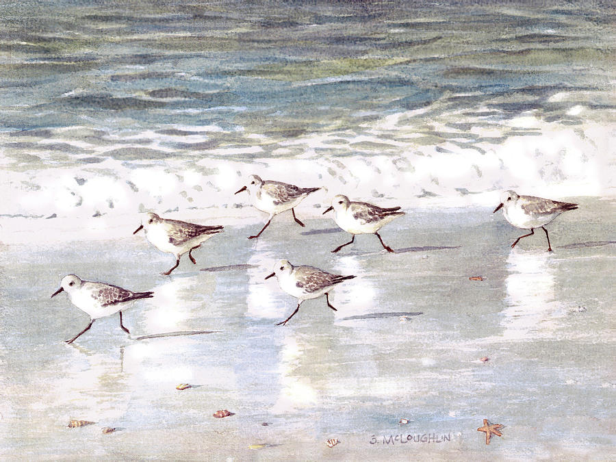 Snowy Plover Sandpipers on Siesta Key Beach by Shawn McLoughlin