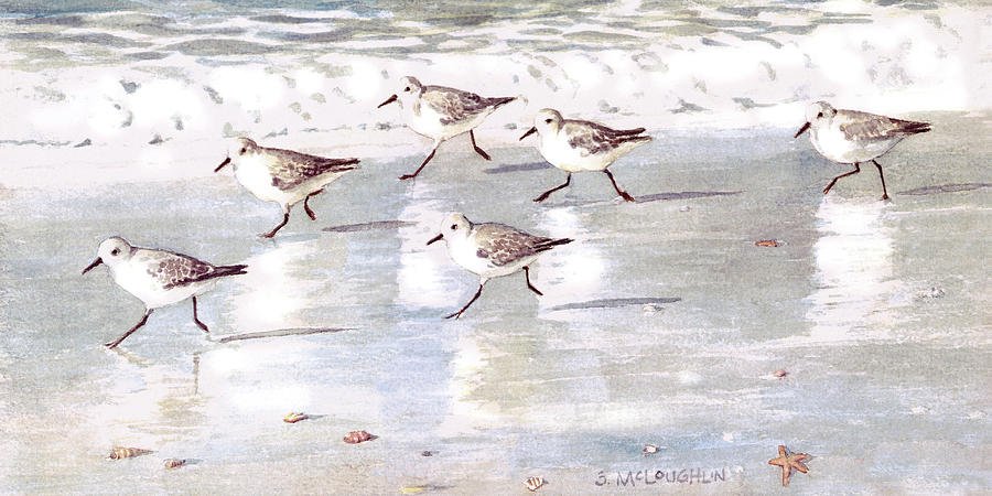 Snowy Plover Sandpipers on Siesta Key Public Beach - wide by Shawn McLoughlin