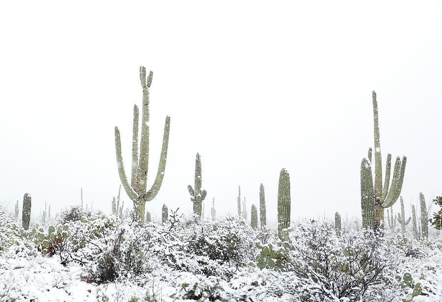 Snowy Saguaro Cactus by Jean Clark