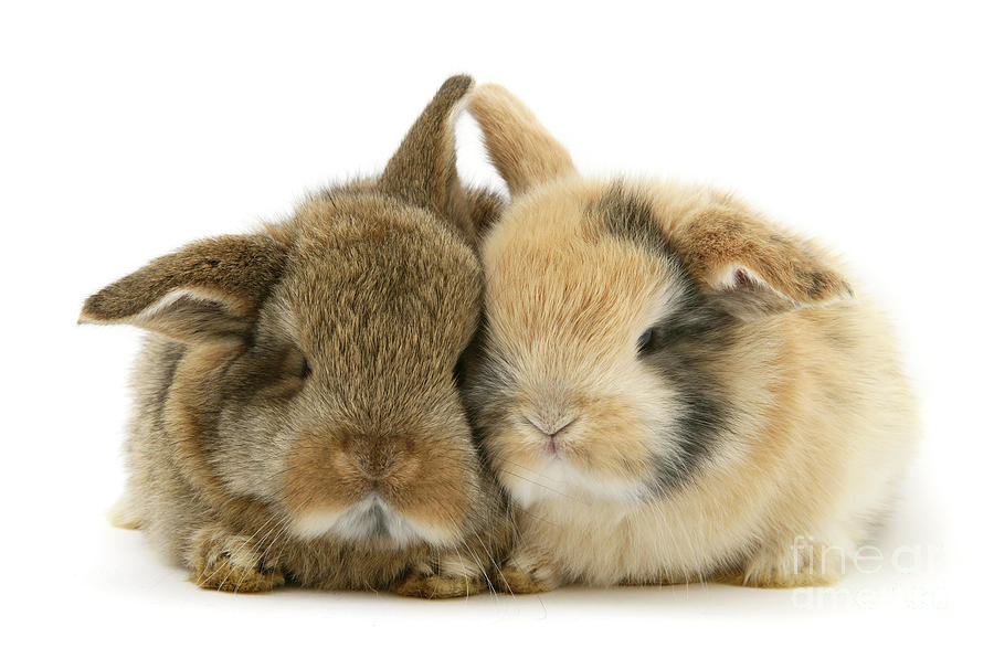 Snuggly Love Bunnies by Warren Photographic