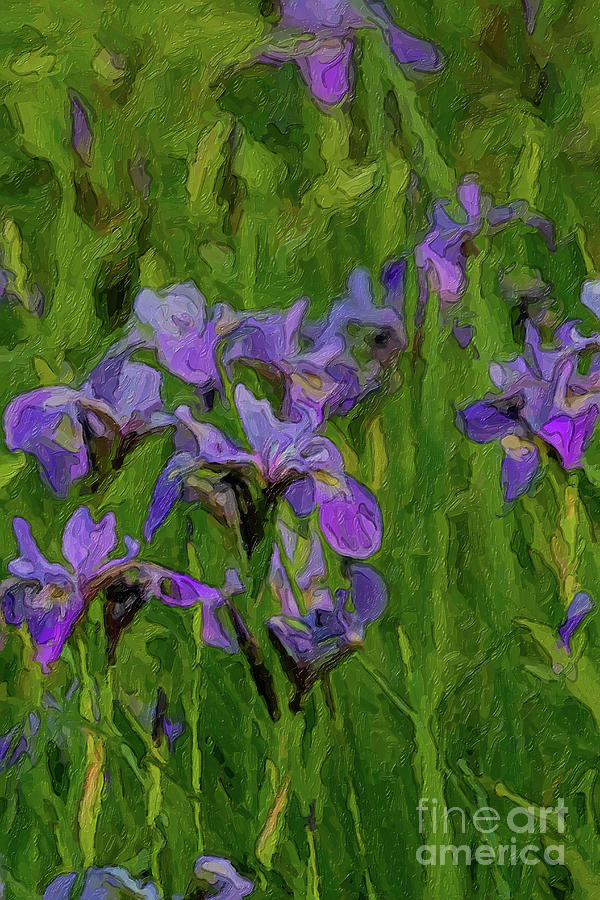 So Grow the Irises by C L Lassila