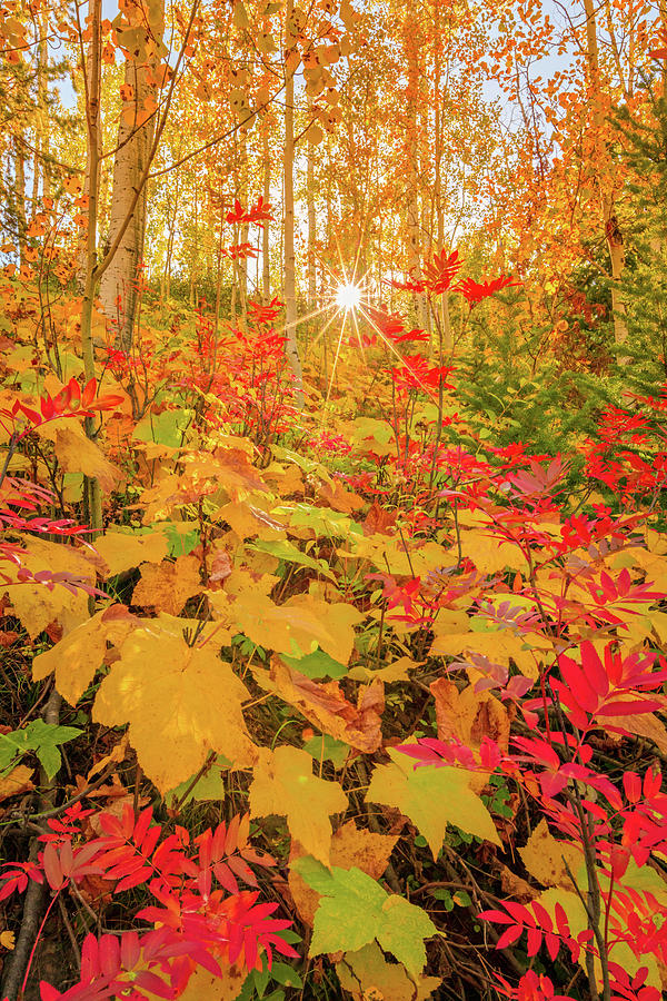 Soapstone Fall Color by Johnny Adolphson