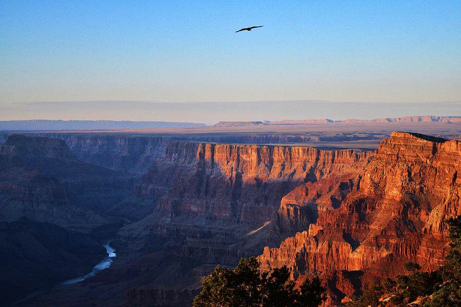 Soaring Over the Grand Canyon by Chance Kafka