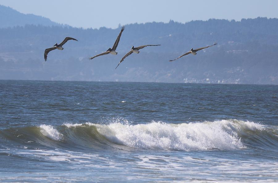 Soaring Pelicans - 2 by Christy Pooschke