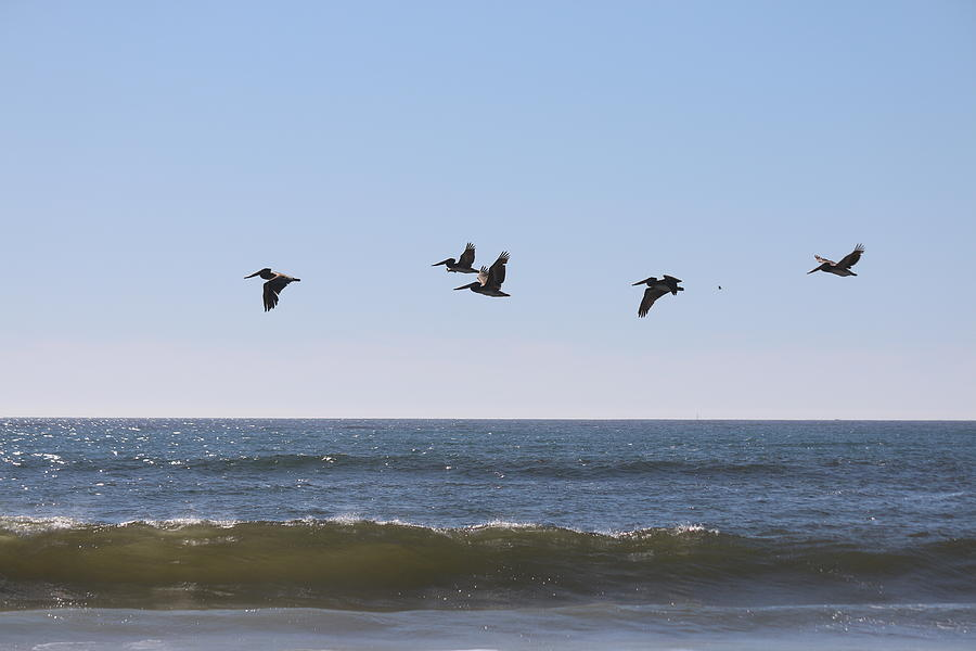 Soaring Pelicans - 4 by Christy Pooschke