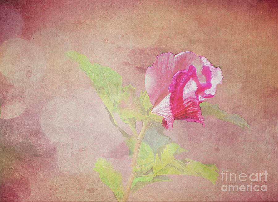Soft Textured Pink Blossom by Rebecca Carr