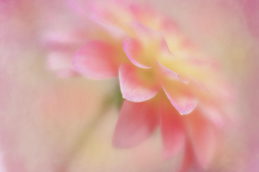 Soft Touch by Mary Jo Allen