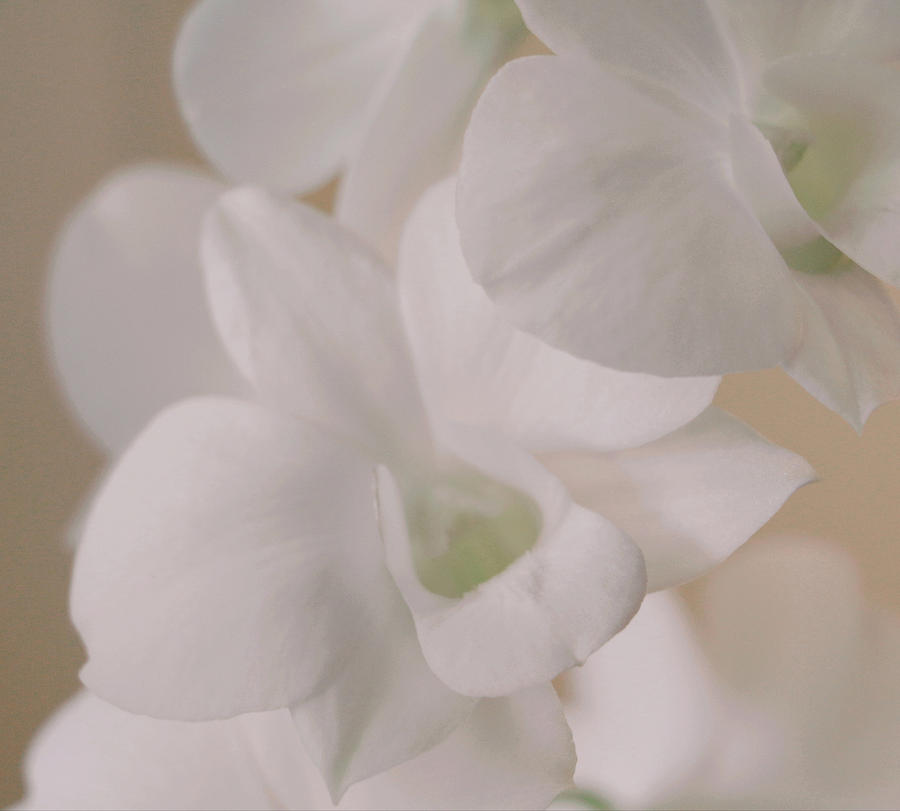 Soft White Orchids by The Art Of Marilyn Ridoutt-Greene