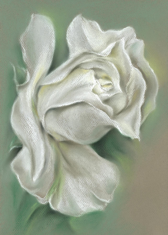 Soft White Rose by MM Anderson