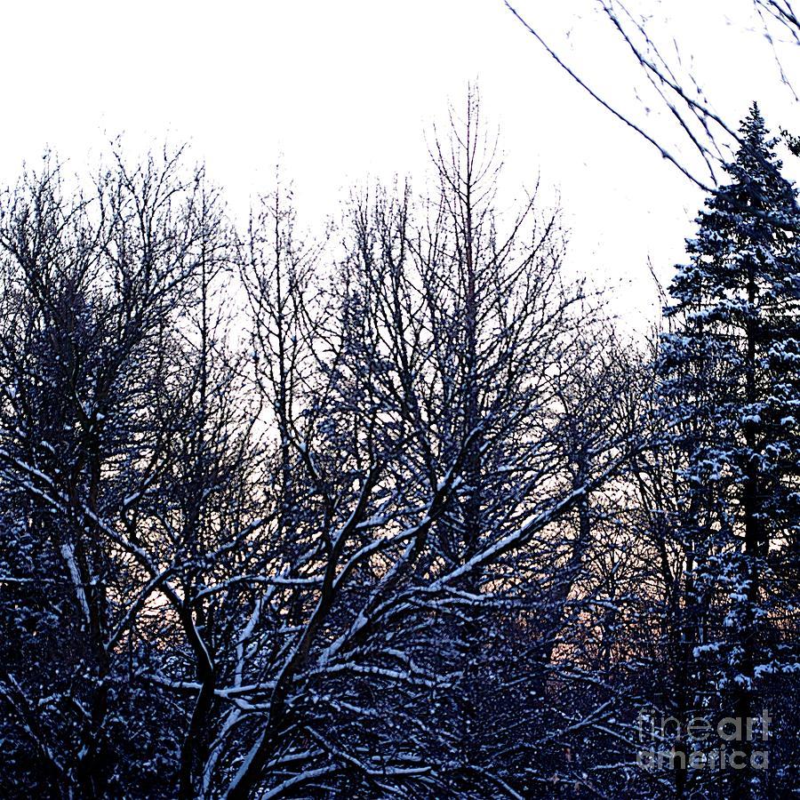 Soft Winter Sunrise by Frank J Casella